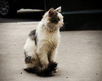 На Кипре не работают государственные приюты для бездомных собак и кошек