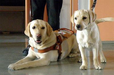 На Украине открывается центр подготовки собак-поводырей