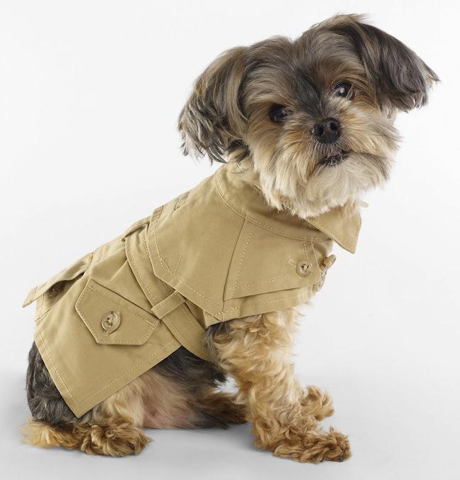 Ральф Лорен создал коллекцию для собак