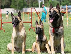 В Симферополе занялись размещением площадок для собак