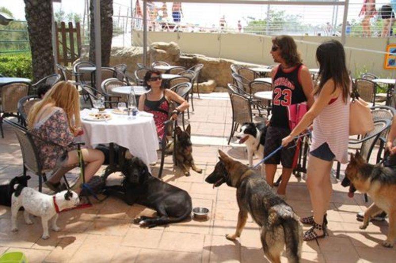 В Каталонии открылся ресторан для собак