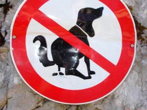 Собаки всегда делают кучу на север — ученые