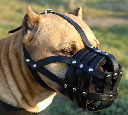За выгул бойцовских собак без намордников их владельцам «светит» статья