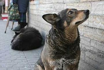Число бездомных собак в Петербурге в последние 20 лет колебалось от 7 до 10 тыс.