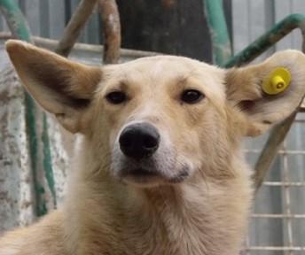 В Вологде защитники животных пометили бездомных собак специальными клипсами