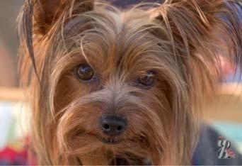 В США собаке выдали человеческую медицинскую страховку