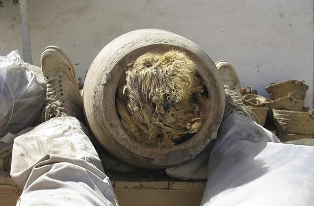В Египте обнаружены трёхтысячелетние сосуды с останками собак