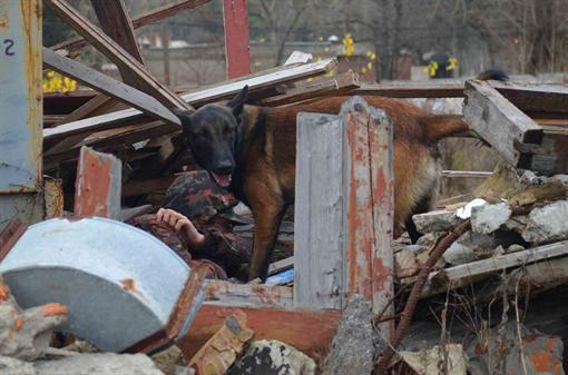 В Харькове собаки-иностранцы искали заблудившихся и спасали из-под завалов