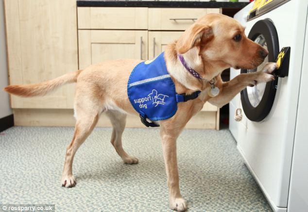 Теперь собака-помощник сможет даже постирать инвалидам белье