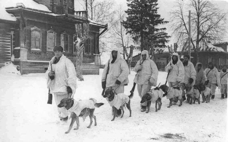 Для победы в ВОВ Сталин использовал «собак-камикадзе»