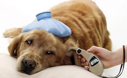 Защита собак от блох и клещей
