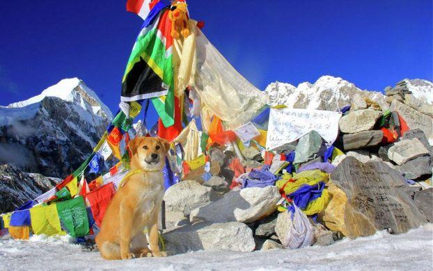 Щенок Рупи стал первой собакой, поднявшейся на базовый лагерь Эвереста