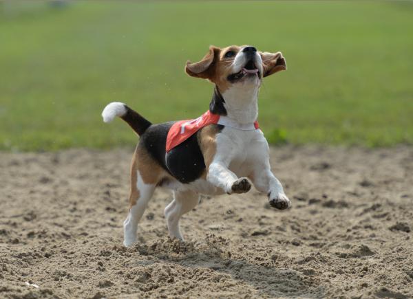 Профессор Бернс: собаки испытывают человеческие эмоции