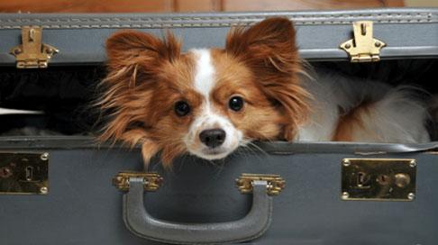 Минтранс РФ изменил правила перевозки крупных собак в поездах дальнего и пригородного сообщения