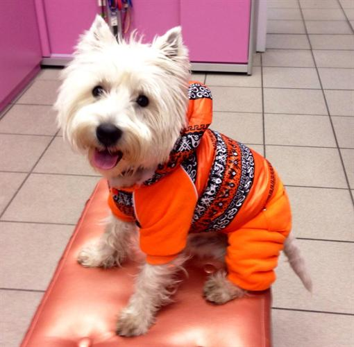 """Собак можно утеплить за 200-300 грн. Фото: магазин """"Glamourdog"""""""