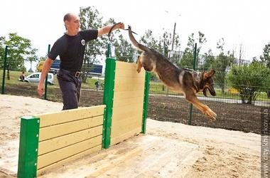 В Харькове открыли площадку для собак с мостами и трамплинами