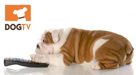 В США появился первый телеканал специально для собак