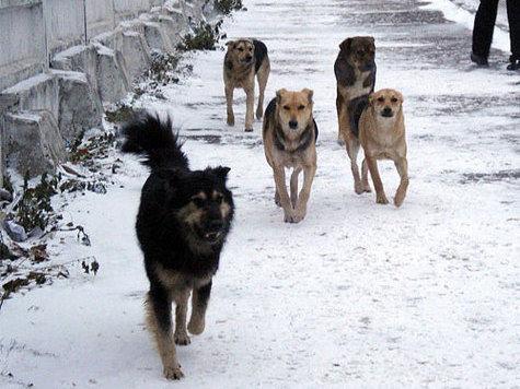 Воркутинцев терроризируют бездомные собаки