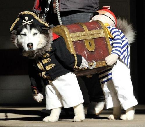 Два пирата