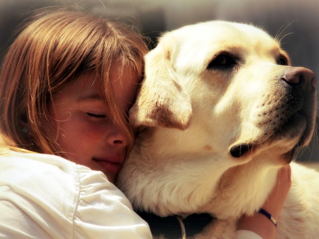 Украинцам до 16 лет запретили заводить собак и кошек