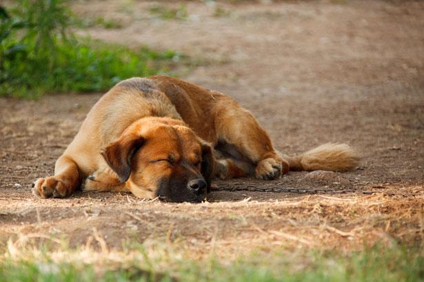 Ученые выяснили, почему перед тем, как лечь, собаки крутятся на одном месте