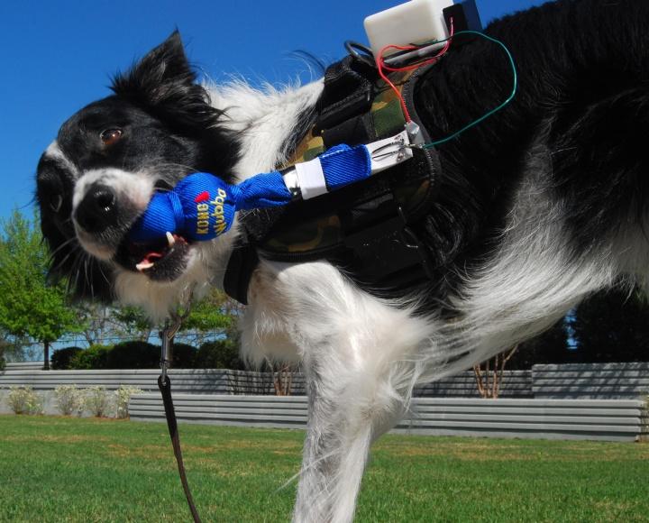 Пользоваться гаджетами научат даже собак